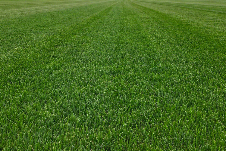keevan brothers sod farms st charles mo